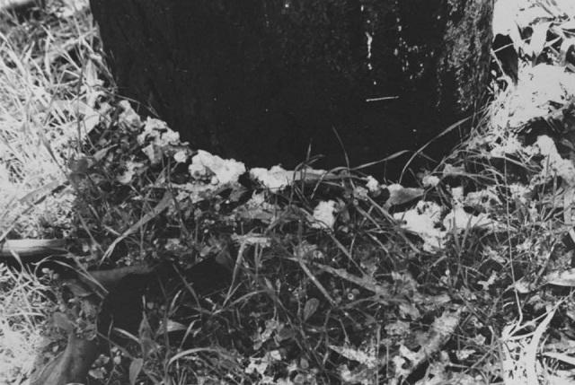 אביב יצחקי ים המלח 1973 - 2